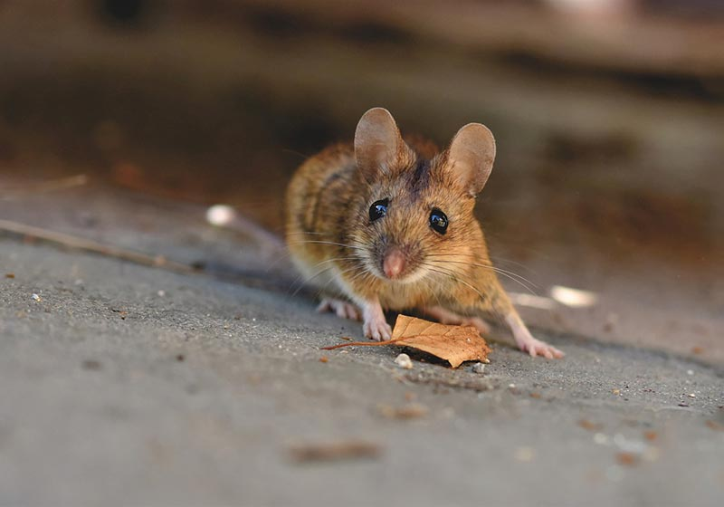 Mouse on Home